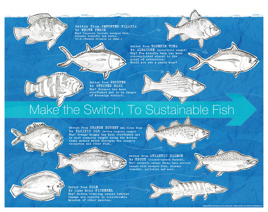 Types Of B Fish | Fish Friday Sustainable Fish Infographic Poster Wellpreserved