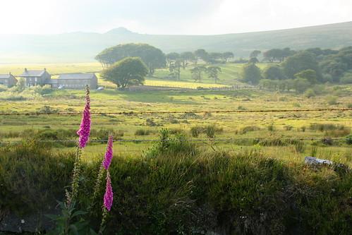 The Evening Sun in Dartmoor