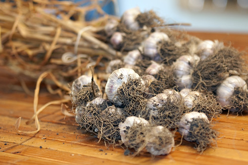 Purple Glazer Garlic