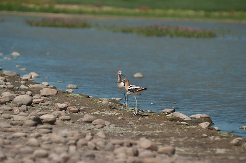canada bird geotagged wildlife saskatchewan limerick gmpentaxfan