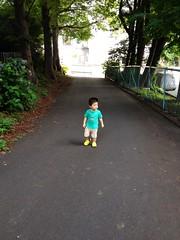 朝散歩 並木道とらちゃん (2012/7/25)