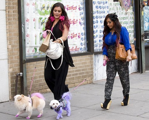 j'wow and snooki dyed dogs