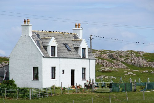 Birds, House Sitting on Iona