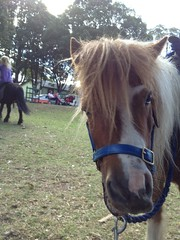 animal, mane, mare, stallion, rein, halter, bridle, pack animal, horse, horse harness, pasture, pony,