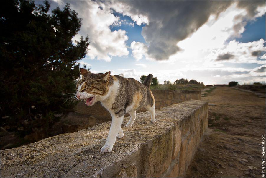 pafos_cat