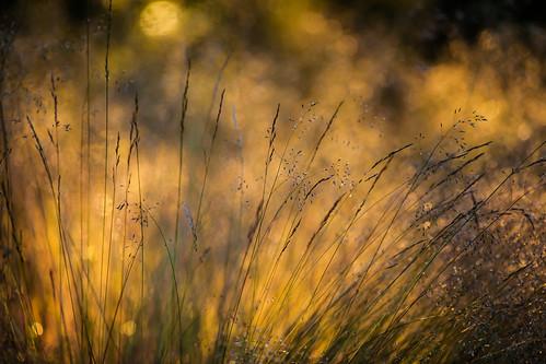 light sunset summer grass se evening sweden sverige uncropped f28 2012 värmdö fav10 stockholmslän ef200mmf28lusm canoneos5dmarkii ¹⁄₁₀₀₀sek ramsdalen 40016072012204013