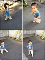 朝散歩とらちゃん (2012/8/9)