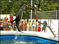 Constanta Dolphinarium show