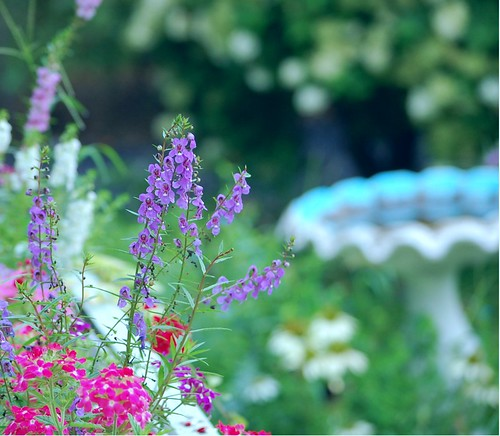 August 11th ~ purple by wendy0112