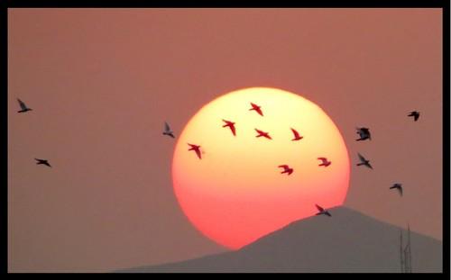 sunset birds غروب پرندگان baraz براز ebrahimbaraz ابراهیمبراز