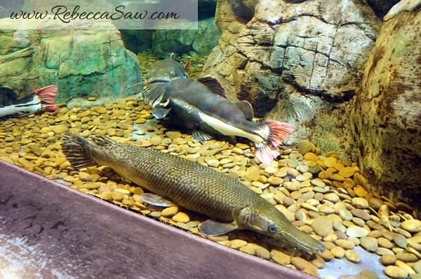 Singora Tram Tour - songkhla aquarium thailand-002