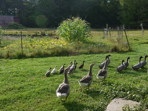 Our Flock