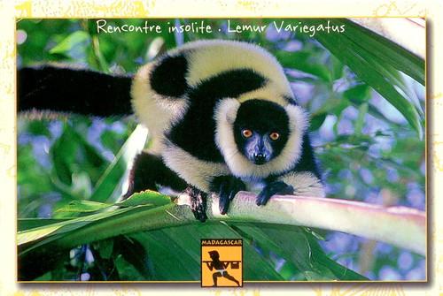 明信片-馬達加斯加正面
