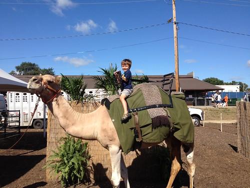 218 camel ride