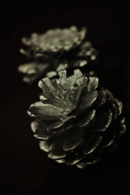 imagination of silver pinecone