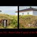 Root cellars in Elliston, Newfoundlandand Labrador by Nancy Rose