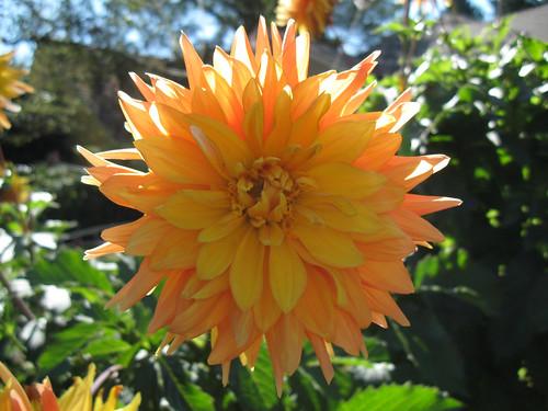 Macro Flowers 1