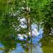 <p><a href=&quot;http://www.flickr.com/people/69056479@N06/&quot;>pasiak75</a> posted a photo:</p>&#xA;&#xA;<p><a href=&quot;http://www.flickr.com/photos/69056479@N06/29189635781/&quot; title=&quot;A pond., Reflection.&quot;><img src=&quot;http://farm9.staticflickr.com/8290/29189635781_3bbec6db28_m.jpg&quot; width=&quot;160&quot; height=&quot;240&quot; alt=&quot;A pond., Reflection.&quot; /></a></p>&#xA;&#xA;