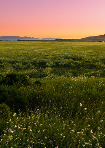 california travel summer nature grass twilight warm july estuary novato slough wetland searspoint sanpablobay 2011 saltwatermarsh