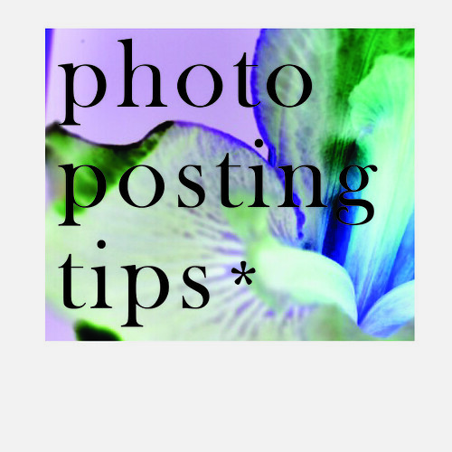 Tips for Posting Blog pics