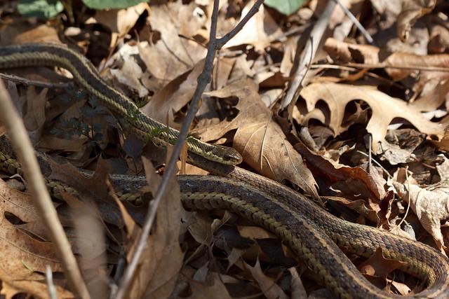 Image Result For Snake Hill Farm