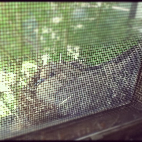 the nest!