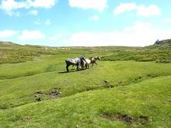 Traversée Frauletu-Giavingiolu : remontée du Giavingiolu avec les chevaux vers la source