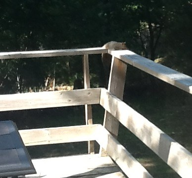 Apparently our deck is where the cool neighborhood squirrels hang out.