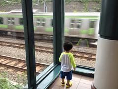 電車を見るのが大好きなとらちゃん (2012/7/22)