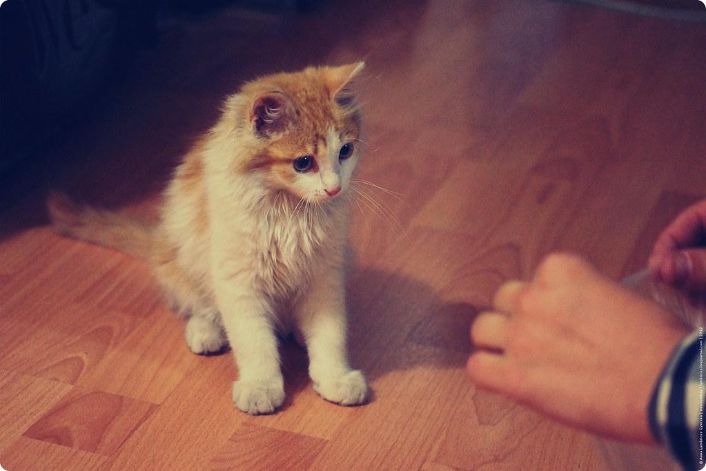 Заиграевский котик