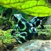 Frog Norwalk Aquarium