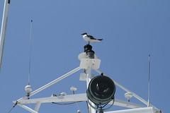 Sea Gull Onboard the Starlight
