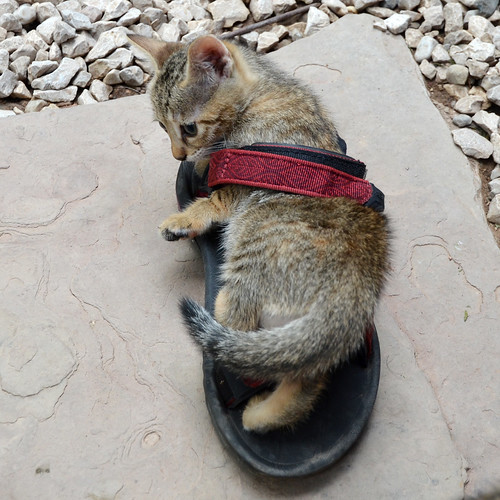 Aaah, that's how those sandals are supposed to be worn!