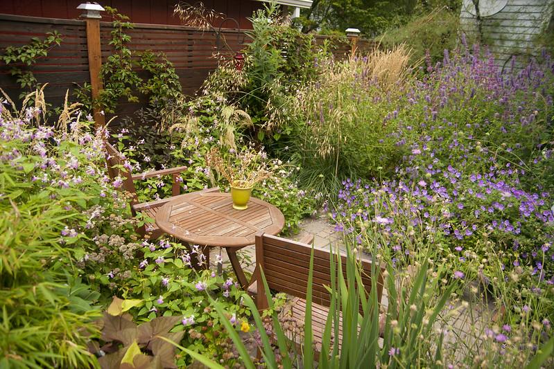 Backyard August 9 2012
