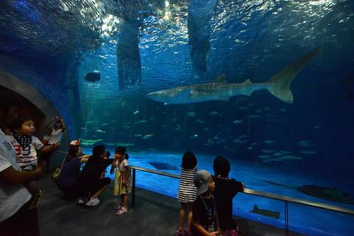 2012夏日大作戰 - 鹿児島 - かごしま水族館 (8)