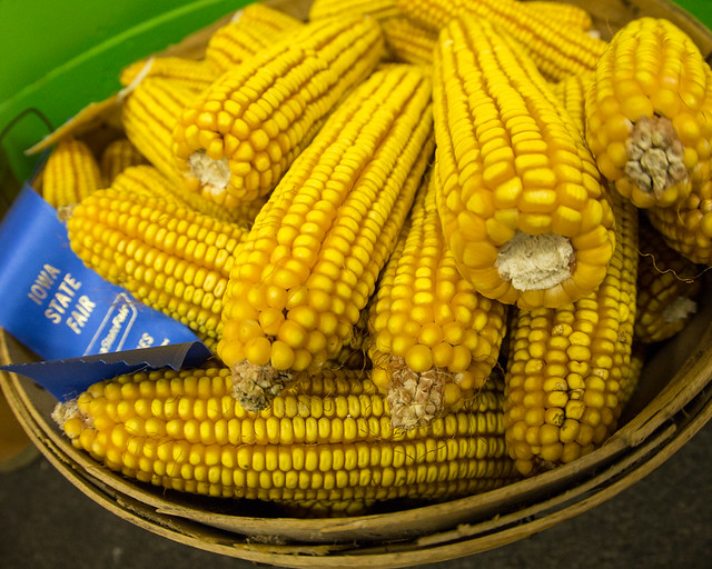 Iowa State Fair - Blue Ribbon Bushel