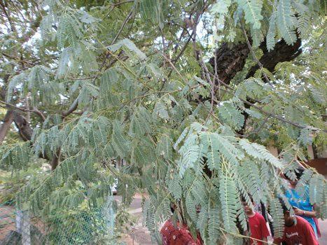 Nizhal-Tree-Walk-Kalakshetra-Diff-Leaves