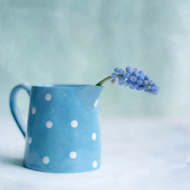 Spotty blue Monday - Creative Still Life Photography
