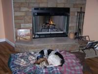dolly, dog, fireplace, sleeping
