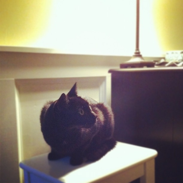 Gibby likes the new #IKEA INGOLF stools.