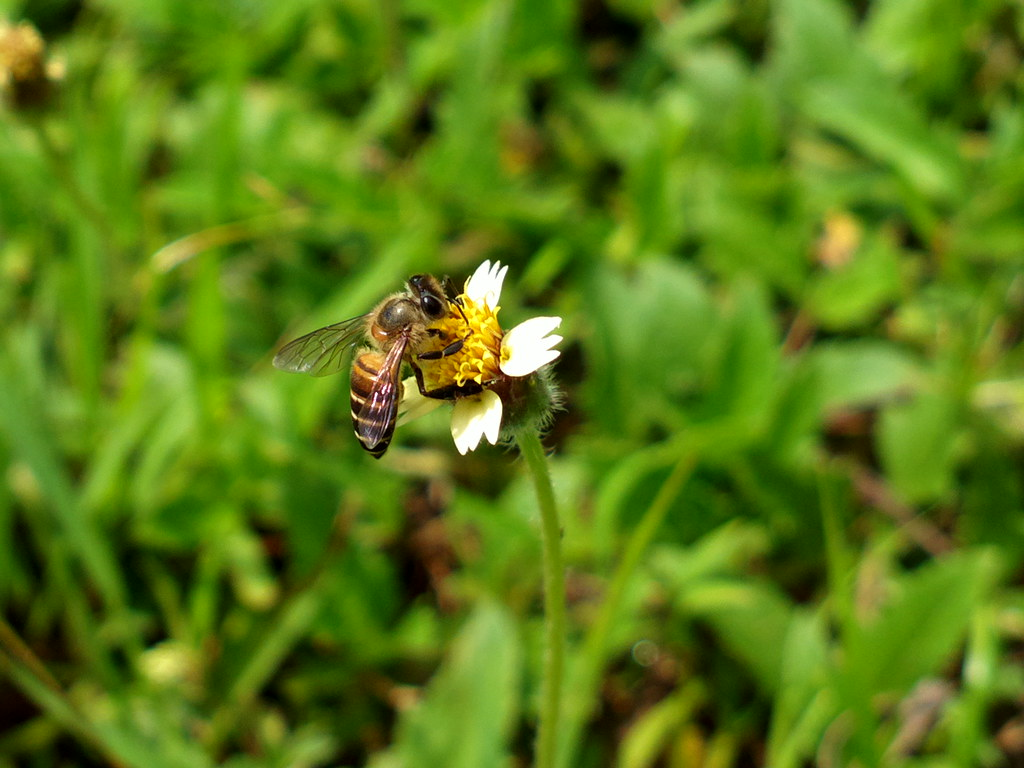Nokia 808 pureview @ bee and flower
