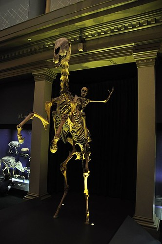 The Skeleton Gallery, Australian Museum