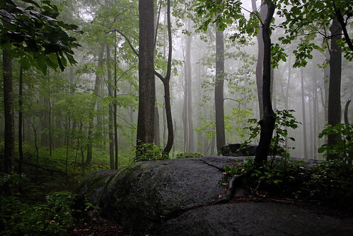 Old Rag Mountain: Misty forest
