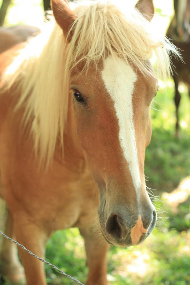horsecc