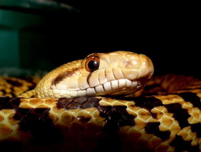 Relaxed snake.