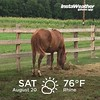 Not too hot for Hope for Hooces! @amazinggraceequinesanctuary #amazinggraceequinesanctuary #hopeforhooves