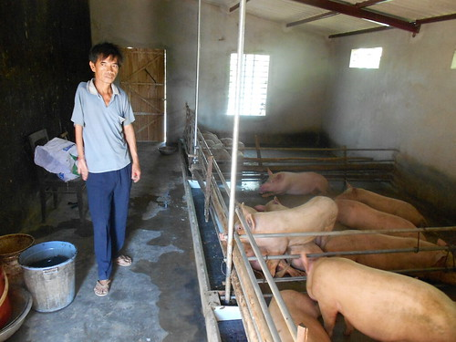 Biogas has allowed Mr. Dao Van Thuan to keep several more pigs