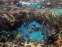 美國國家海洋保護區西北夏威夷群島海域中,珊瑚礁上的一張廢棄漁網 (Photo courtesy NOAA/NMFS)