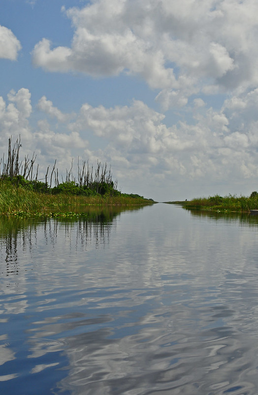 Everglades (4)