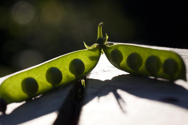 peas in a pod 3